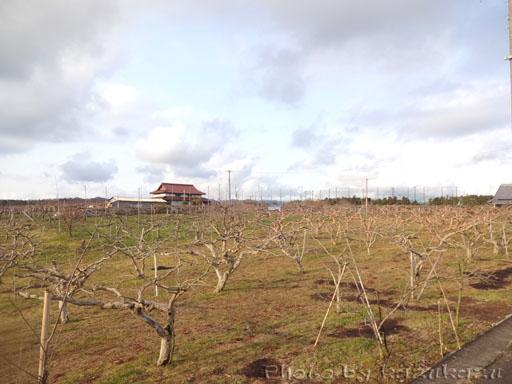 岐阜県美濃加茂市ヤマキ農園・ヤマキマルシェの梨畑