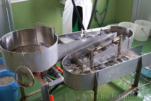 宮城県松島の磯崎漁業組合の牡蠣装置
