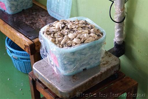 宮城県松島の磯崎漁業組合の牡蠣誕生