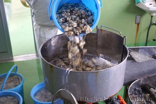 宮城県松島の磯崎漁業組合の大量の牡蠣